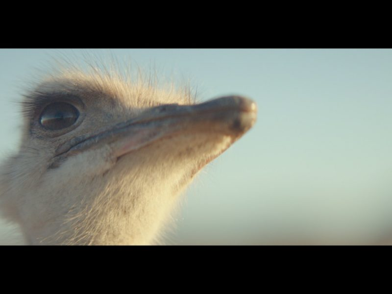 Ostrich Galaxy Brand Commercial Wins 13 Awards